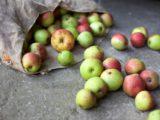 Praktische Fruchtnetze kaufen