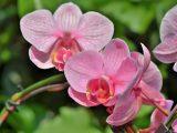 Orchideen pflegen – gesundes Wachstum für empfindliche Pflanzen